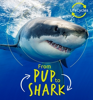 Lifecycles - Pup To Shark (Lerner)