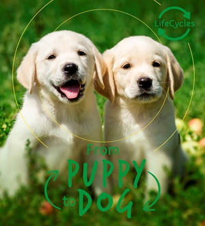 Lifecycles - Pup To Dog