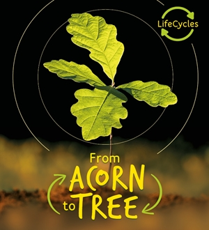 Lifecycles - Acorn to Tree