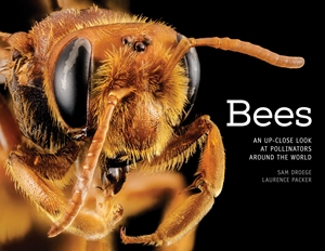 Bees An Up-Close Look at Pollinators Around the World