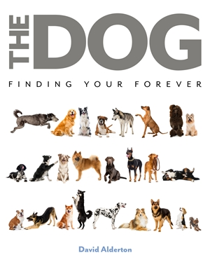 The Dog Finding Your Forever