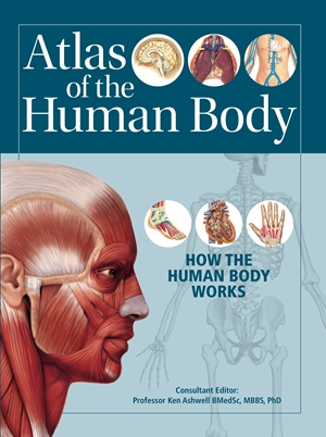 Atlas of the Human Body by Prof  Ken Ashwell