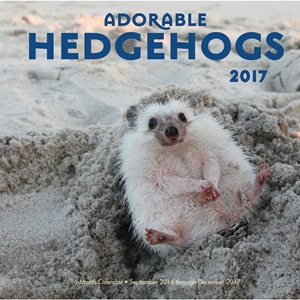 Adorable Hedgehogs 2017
