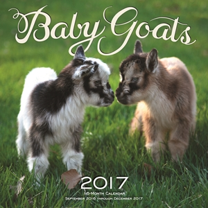 Baby Goats 2017