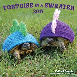 Tortoise in a Sweater 2017