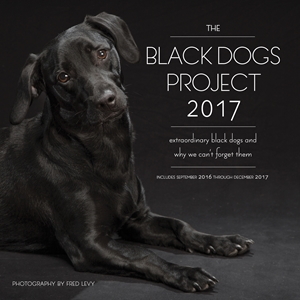 The Black Dogs Project 2017