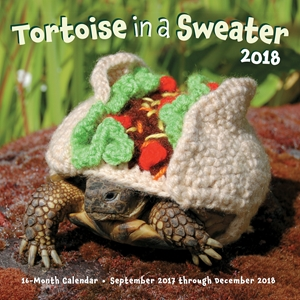 Tortoise in a Sweater 2018