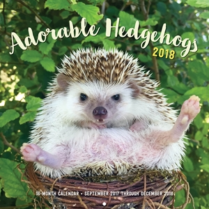 Adorable Hedgehogs 2018
