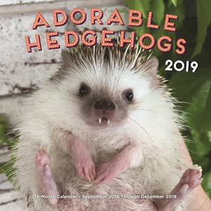 Adorable Hedgehogs 2019