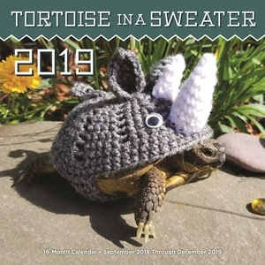 Tortoise in a Sweater 2019