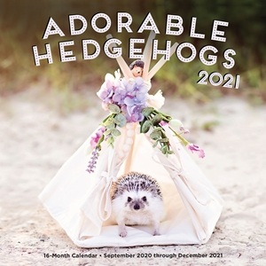 Adorable Hedgehogs 2021