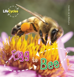 Egg To Bee