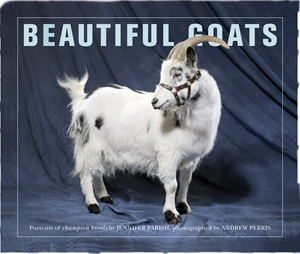 Beautiful Goats Portraits of Classic Breeds Preened to Perfection