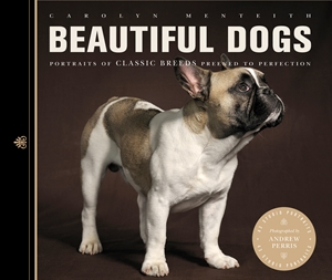 Beautiful Dogs Portraits of Champion Breeds Preened to Perfection