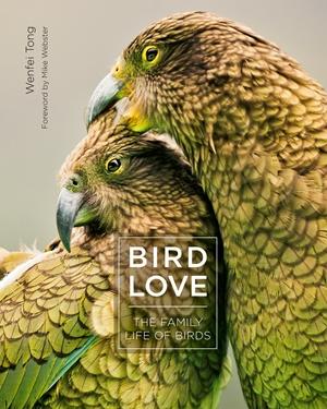 Bird Love The Family Life of Birds