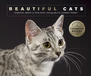 Beautiful Cats Portraits of champion breeds