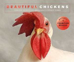 Beautiful Chickens Portraits of champion breeds