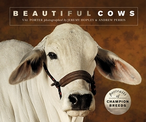 Beautiful Cows Portraits of champion breeds