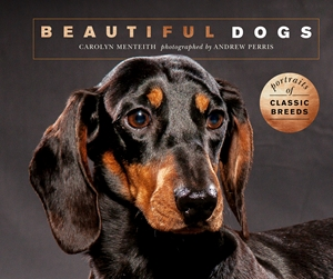 Beautiful Dogs Portraits of champion breeds