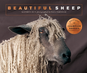 Beautiful Sheep Portraits of champion breeds
