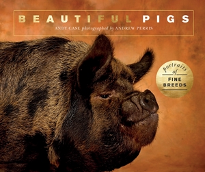Beautiful Pigs Portraits of champion breeds