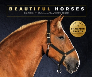 Beautiful Horses Portraits of champion breeds