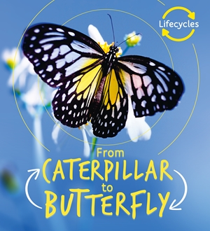 Lifecycles: Caterpillar to Butterfly