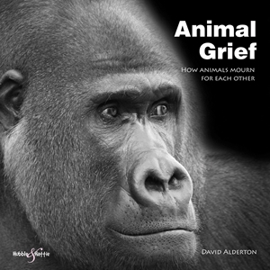Animal Grief How Animals Mourn