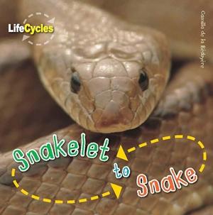 Snakelet to Snake