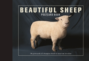 Beautiful Sheep Postcard Book