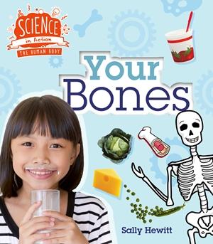Human Body: Your Bones