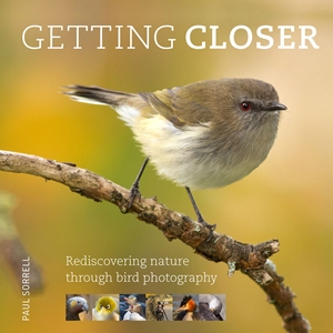 Getting Closer Rediscovering Nature Through Bird Photography