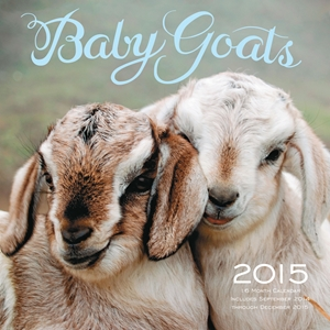 Baby Goats 2015